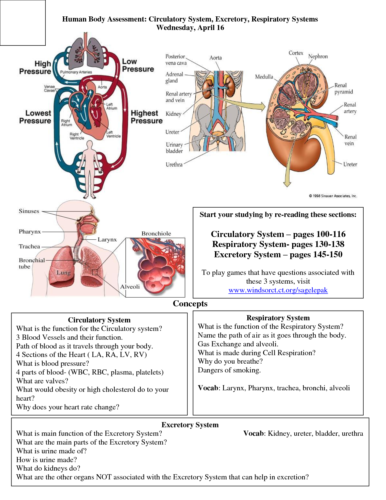 the body s organ systems and their Find out how your body's systems all have to work together to keep you alive  learn about the circulatory, pulmonary, coronary, lympahtic systems.