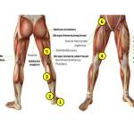 nerves of the legs