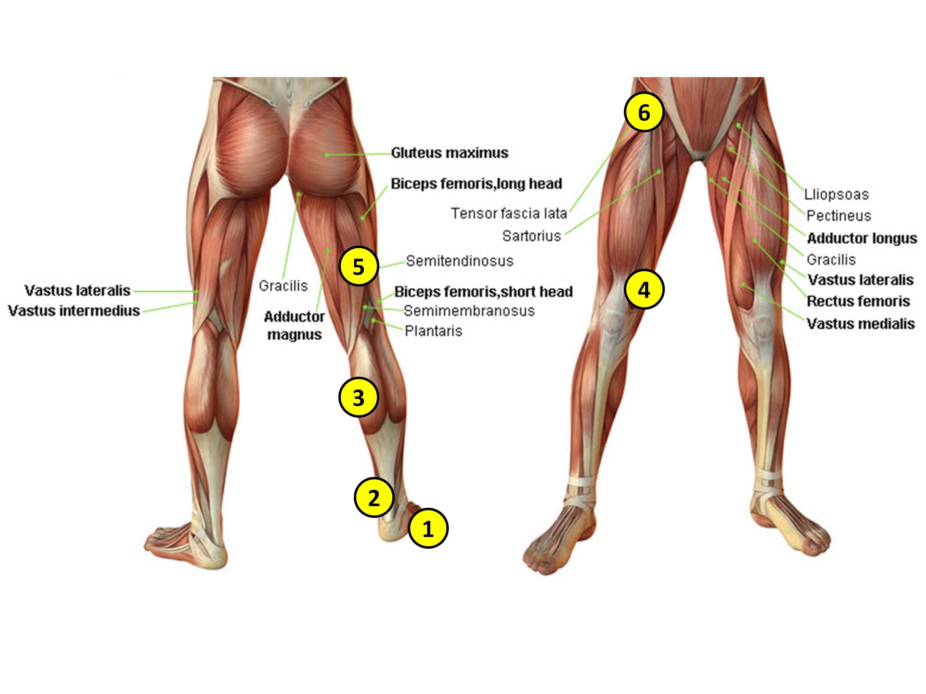 Leg Nerves And Reflex Motion In Feet