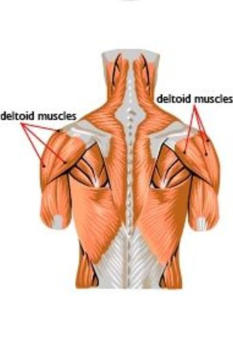 deltoid muscle injection - ModernHeal.com
