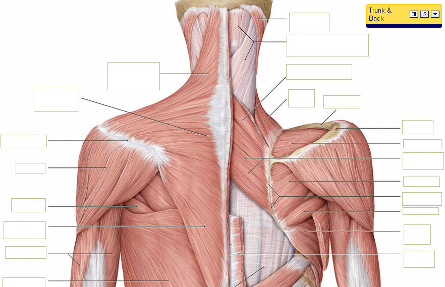 how to develop our body muscles