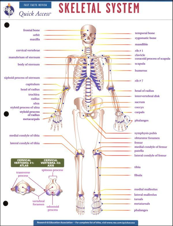 skeletal system activities - ModernHeal.com