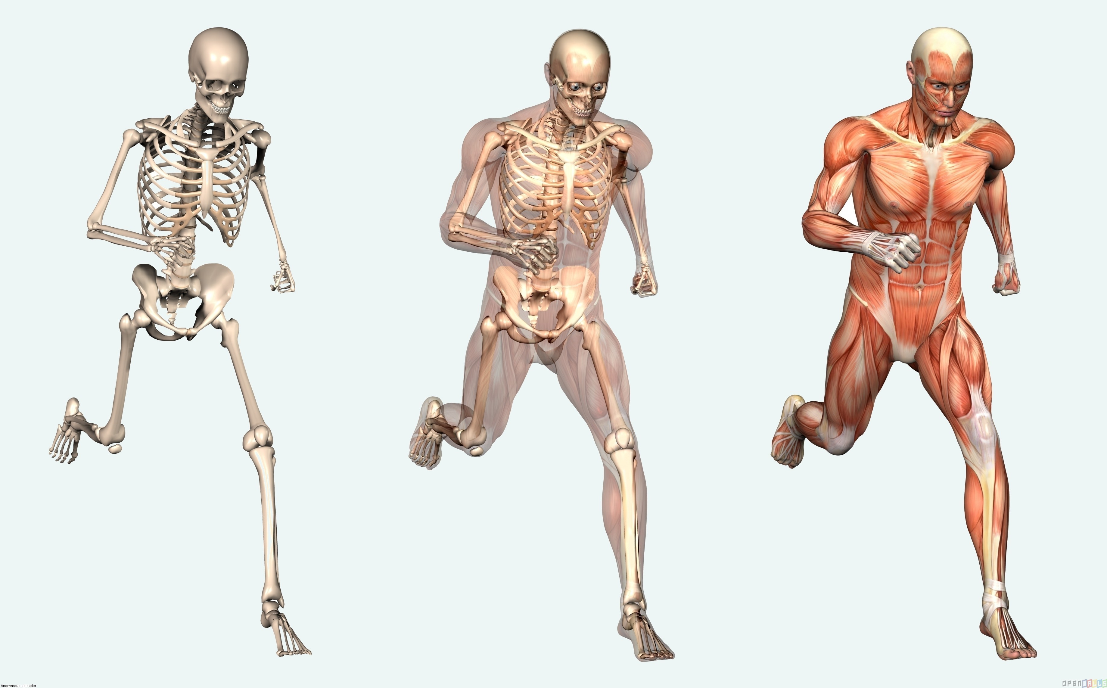 The Human Body And Organs Modernheal