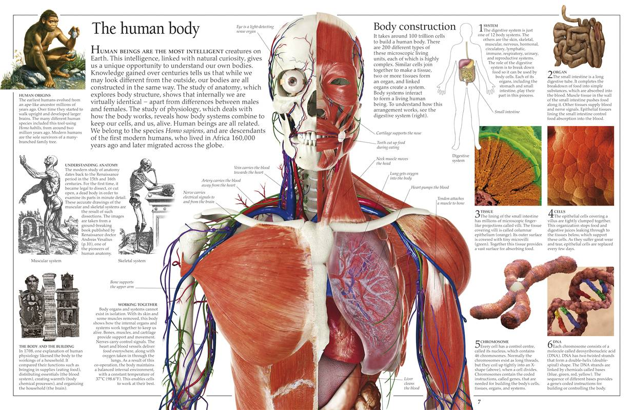 Anatomy for artists the human form revealed