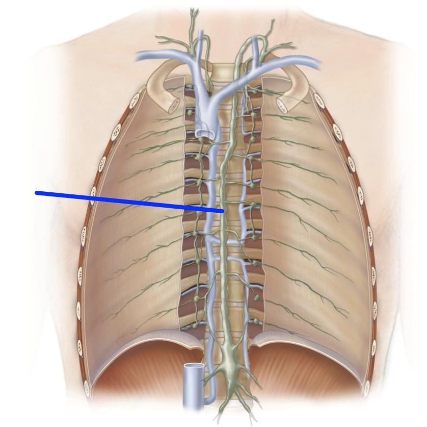 thoracic duct anatomy - ModernHeal.com