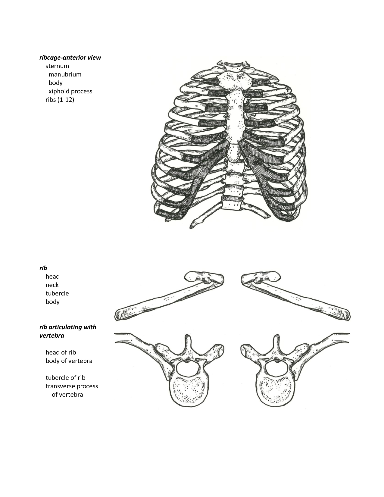 Anatomy handouts pdf