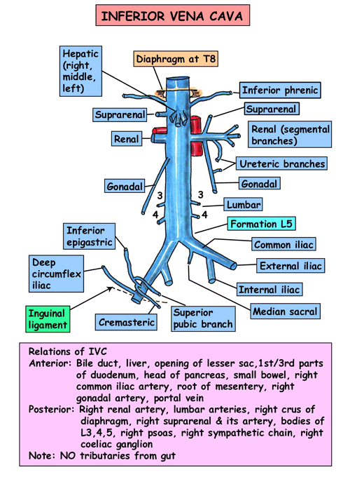 inferior vena cava blockage