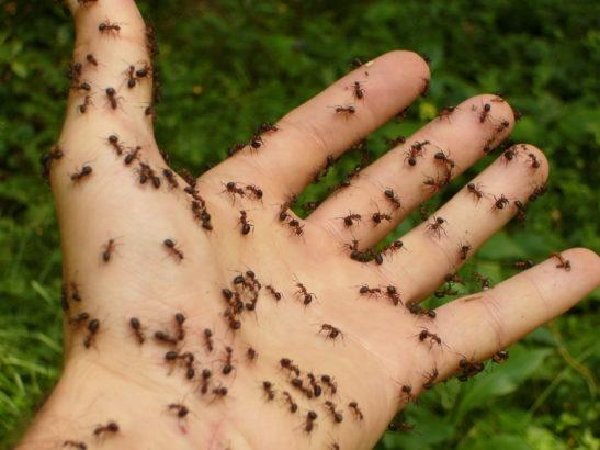 Ant phobia